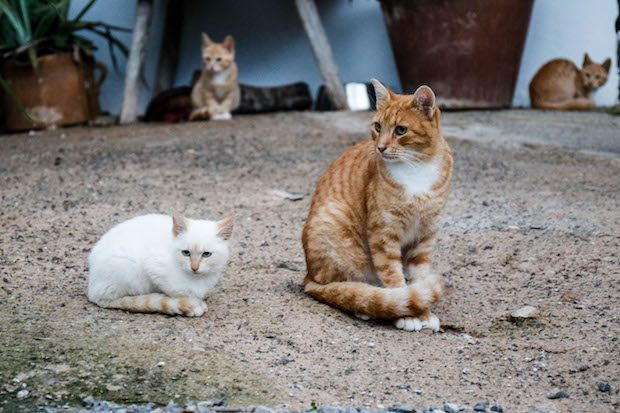Care 4 Cats Ibiza a registered charity taking care of the wild and feral cats across the island
