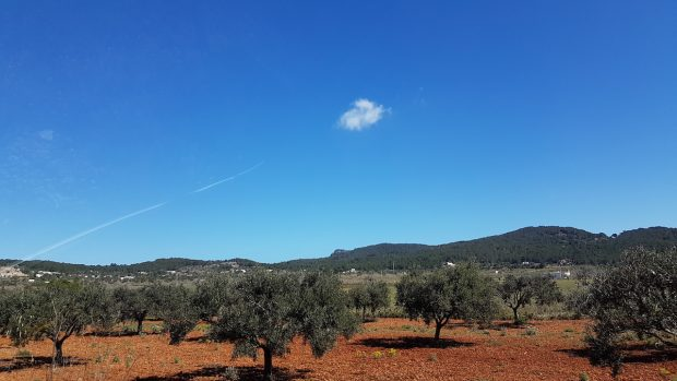 The stunning Ibiza countryside great for exploring