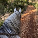 Exploring the North of Ibiza on Horseback