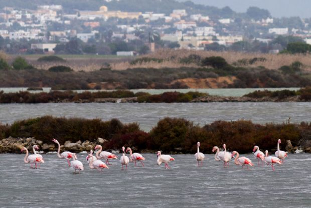 Flamingoes on the salt flats of Ibiza